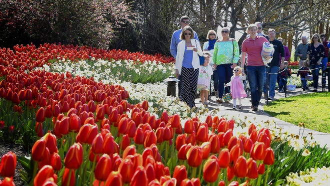 Flowers and trees are blooming and the tulips have come along early because of the warm spring Nashville had had, according to Patrick Larkin, senior vice president of gardens.