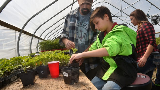 """Jacob """"Jake'' VandenPlas oversees the transplanting of pepper plants from cells to larger containers by his nine-year-old son Nathan. At right is Jake's wife Emily. Tina M. Gohr/USA TODAY NETWORK-Wisconsin"""