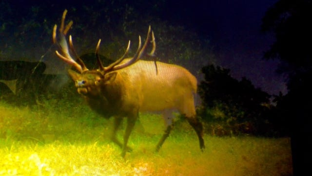 Here is trail cam image of the 761-pound elk that Springettsbury Township's Ricky Sechrist killed in Clearfield County.
