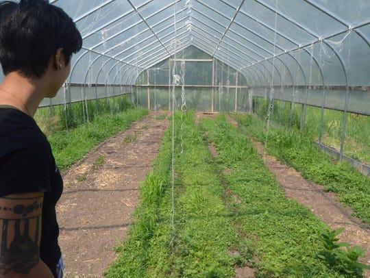 Purslane grows well in Squash Blossom Farms's hoop