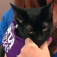 Midnight the cat was featured on News 8 Daybreak Saturday, August 30, 2014.