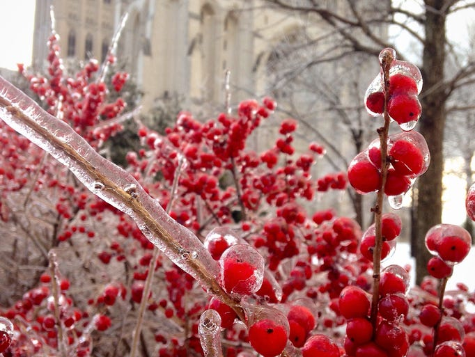 Beautiful frozen red berries at the Washington National