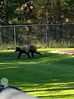 A bear spotted at Incline High caused a lock down Wednesday morning.