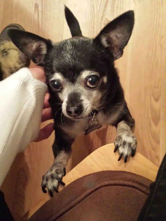 SAL1205-pet adopt 3
