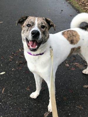 Luke is the Kitsap Humane Society's Pet of the Week