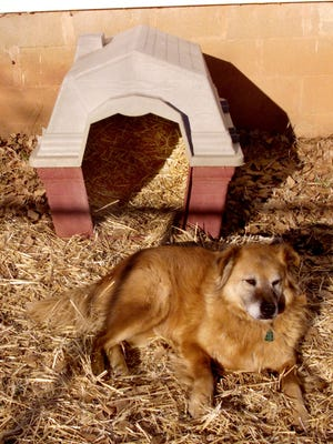 Outdoors dog and house with straw