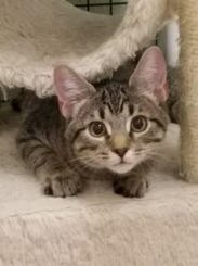 Sunday is one of the kitties who need adopting at the