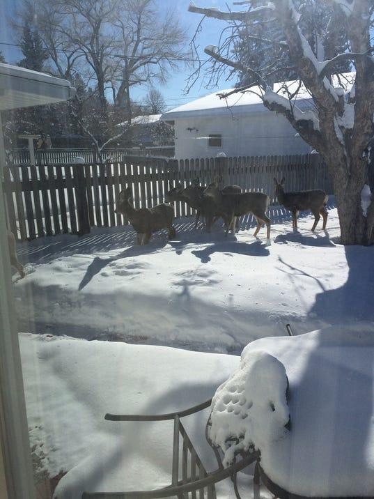 636559619686660493-deer-in-yard-2.jpg