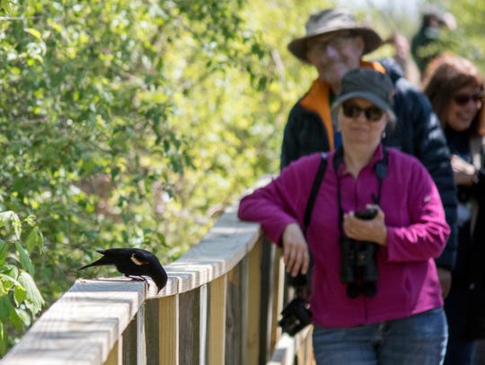 The Biggest Week in American Birding finished strong