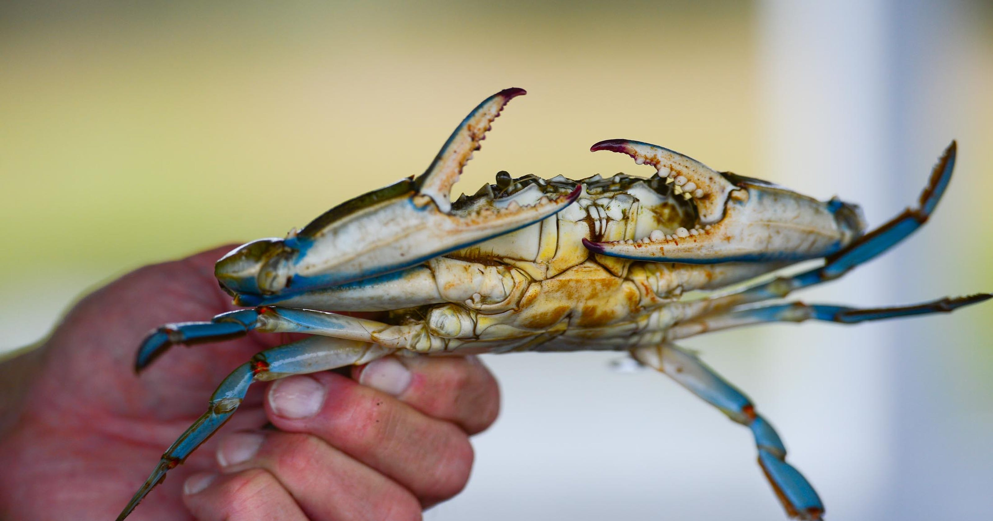 A Virginia woman tried to cook crabs. It didn t go well. 84523f5b26