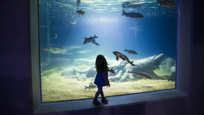 Lyla Keane of San Tan Valley visits OdySea Aquarium near Scottsdale on Sept. 7, 2016.