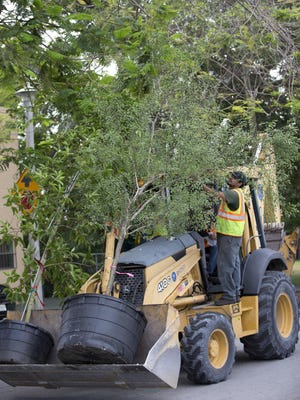 A backhoe is used to bring trees to be planted.