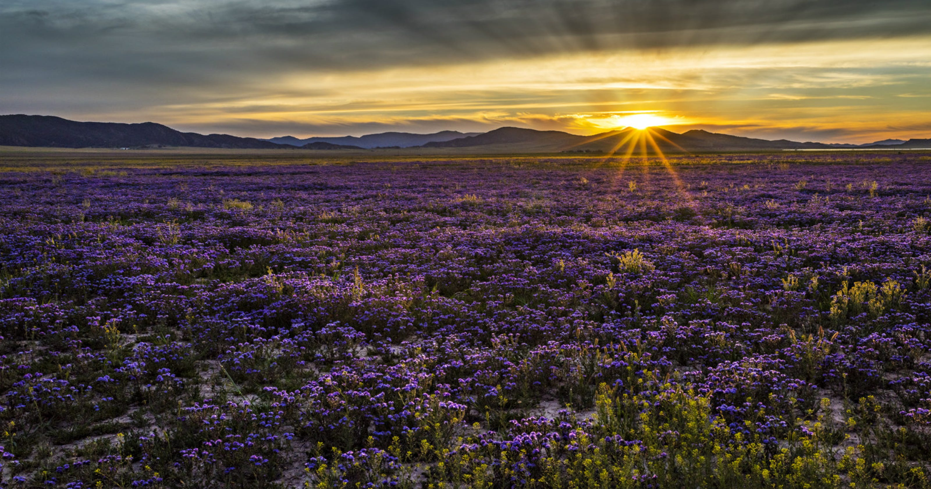 National Parks Flowers Are Blooming This Spring