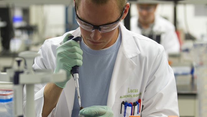 Lucas Eastham works with algae cells at Algenol in June 2013.