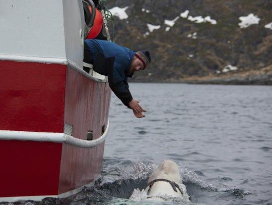 Norwegian fisherman Joar Hesten tries to attract a