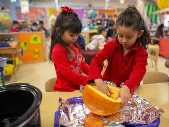 Students Ava Collazo and Genesis Villegas scoop seeds from a pumpkin as part of a class project in a PreK program.