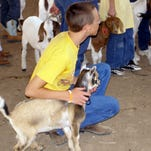 A 4-H member waits for instruction on showmanship with his pigmy goat during 4-H livestock school. The Regional 4-H Livestock School will be in Santa Fe on June 19-20 and Truth or Consequences for the southern region on Friday and Saturday, June 24 and 25. Registration deadline is June 1 for both locations.