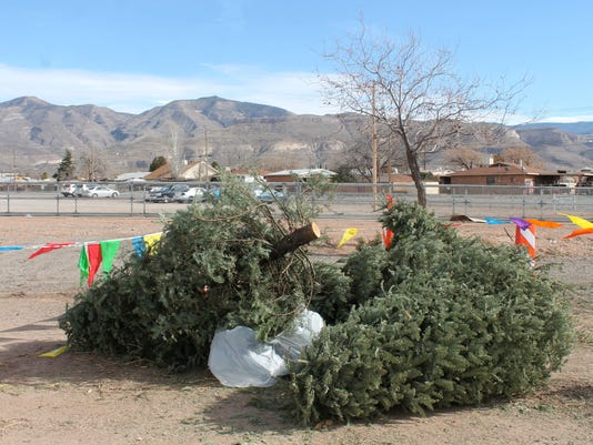 Curb Your Tree Alamogordo 1