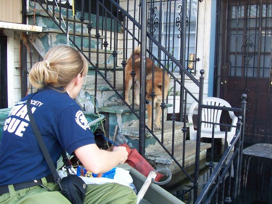 Dog rescue in New Orleans