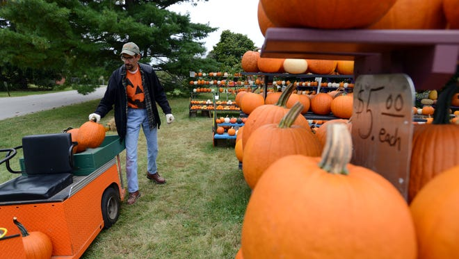 Brian Neeley pulls a pumpkin off a cart as he restocks the shelves Thursday at Neeley Farms on Mud House Road in Lancaster. Growers from around the area experienced lower pumpkin and gourd yields than usual.