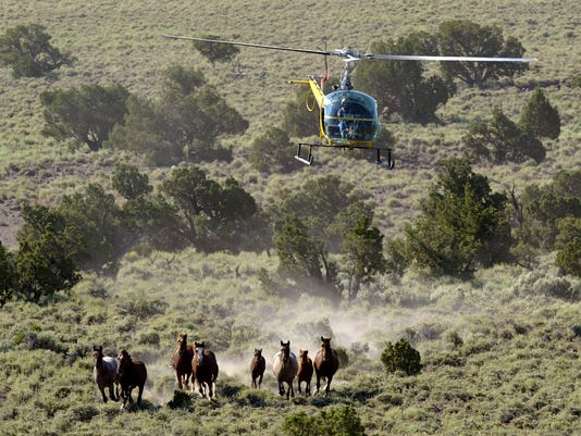 Bureau Of Land Management Rounds Up Wild Horses