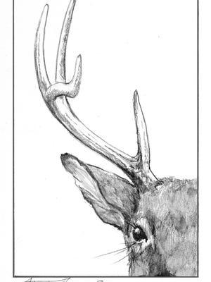 Deer antlers have many uses.