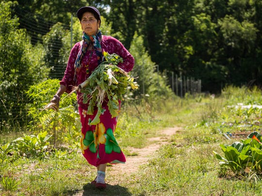 Tanka Paudel, who is originally from Bhutan, harvests her crops at the Growing Together refugee agriculture farm in Nashville.