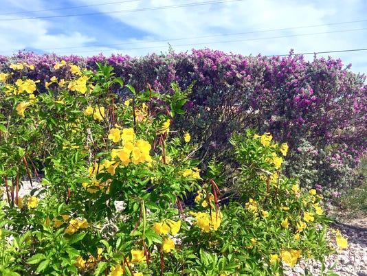Summer-blooms-frontyard.jpg