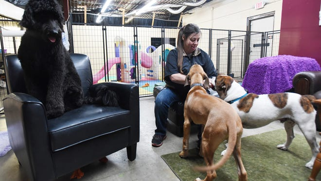 Dawn Rader sits with a trio of dogs at Gone to the Dogs Doggie Daycare in Zanesville.