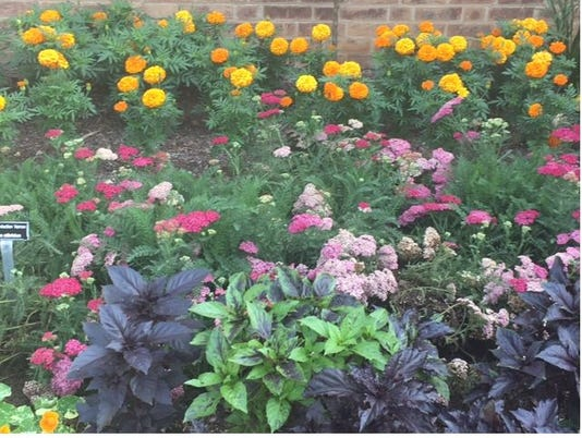 636361409729943924-flowers.JPG