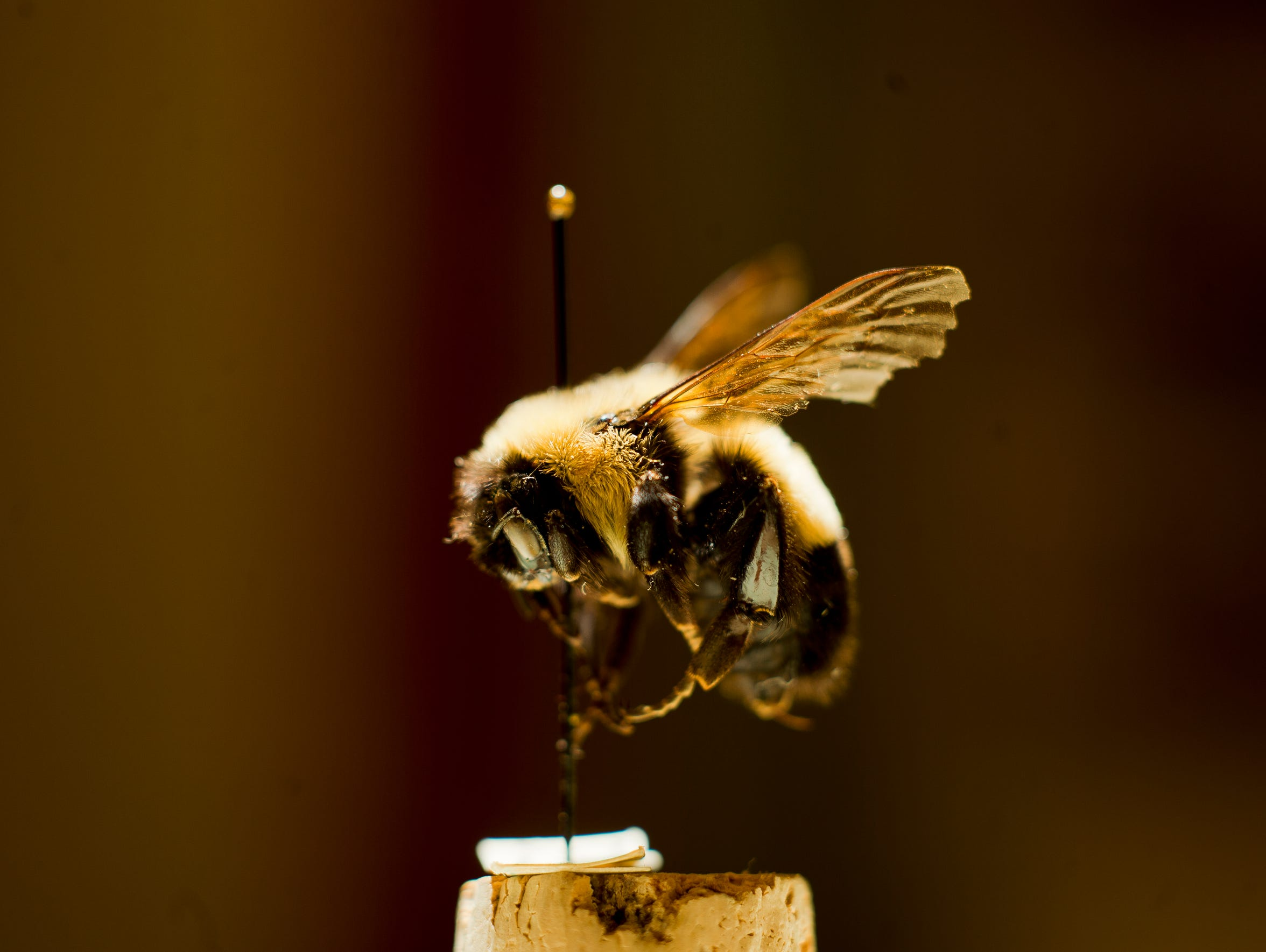 BUR 0826 bees 4.jpg