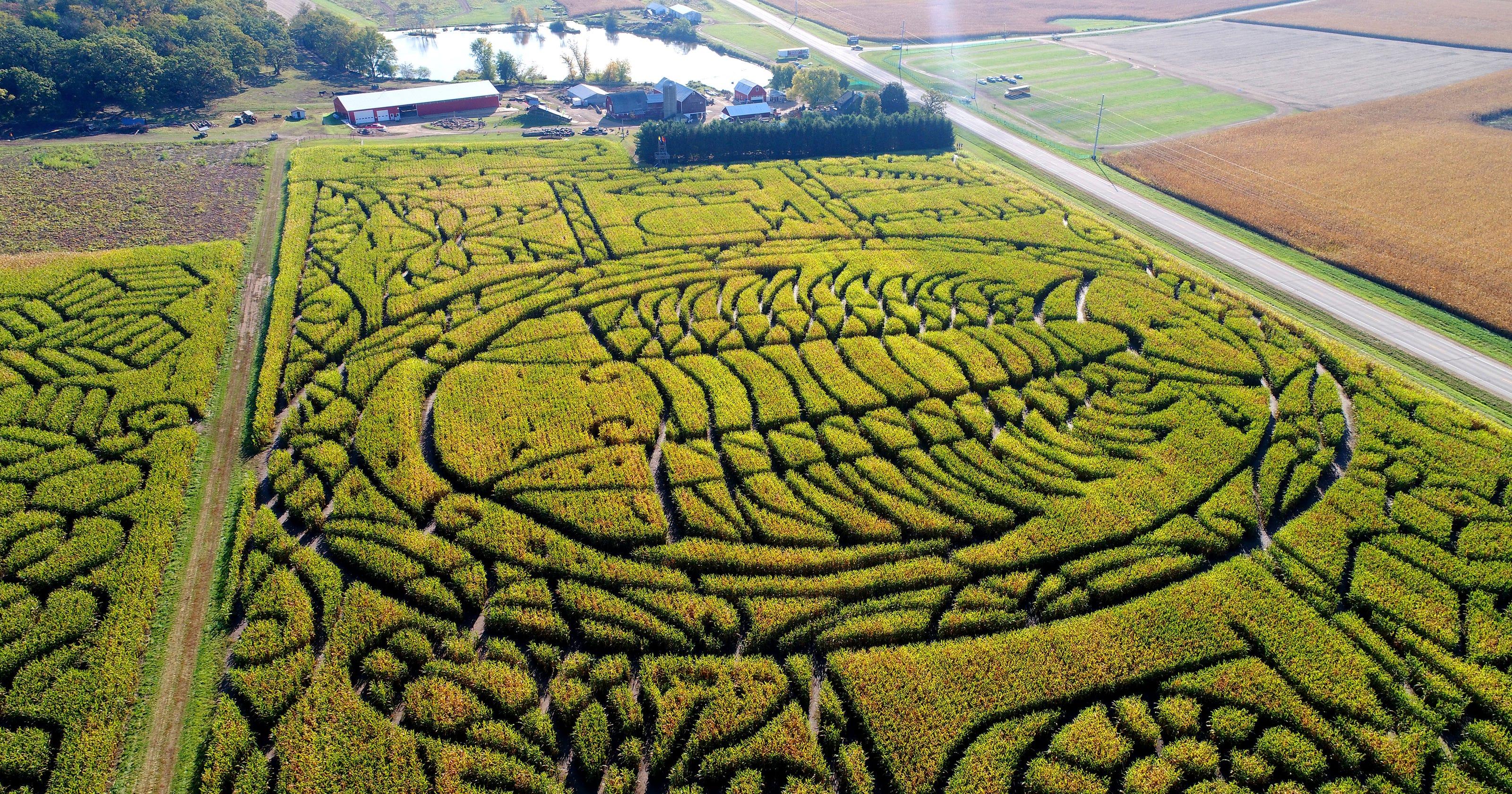corn maze visitors navigate unique path of state fossil the trilobite