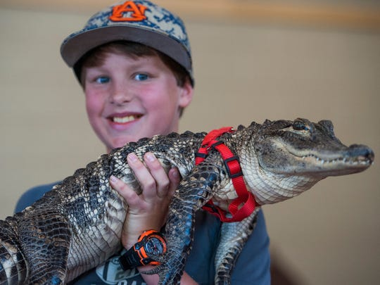 Cason Keller holds an alligator at the Wags 4 Wishes fundraiser at Taylor Crossing Animal Hospital in Montgomery, Ala. on Sunday April 10, 2016.