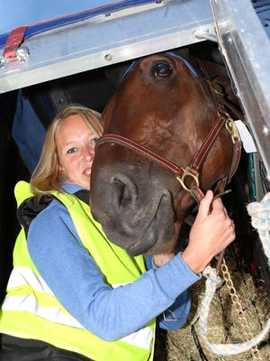 Groomer Ragnhild Diesen of Norway with Papagayo E at JFK Airport on Oct. 1, 2015. The horse traveled to the United States to compete in the International Trot at Yonkers Raceway on Oct. 10.