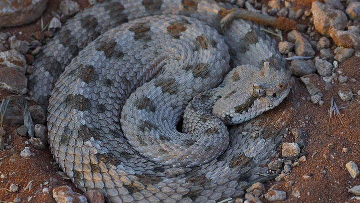 12 most dangerous animals on Southern Utah's trails