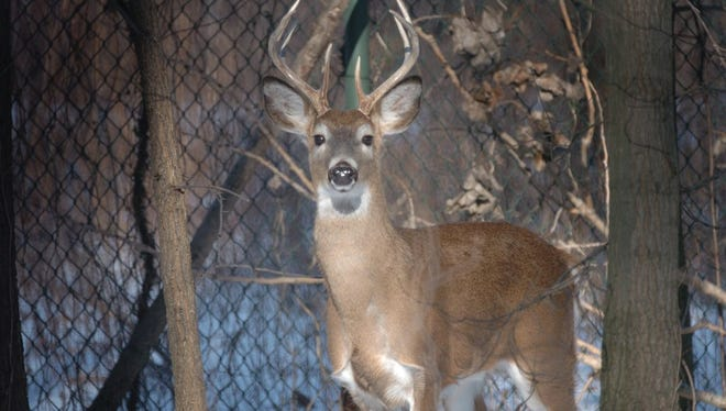 Saddle River's proposed hunt is on hold.