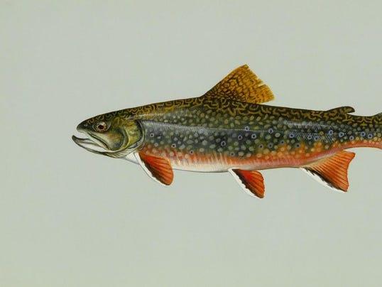 -Brook trout.jpg_20060804.jpg