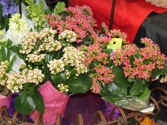Kalanchoes are another popular flowering plant.jpg