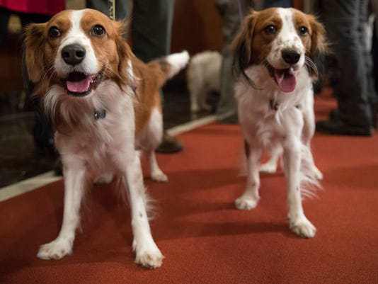 AKC recognizes 2 new breeds
