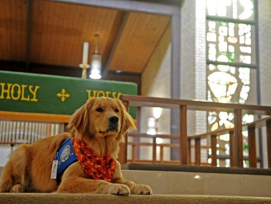 Elijah Comfort Dog