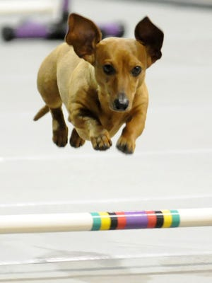 The Pet Expo is March 27-29 at Shopko Hall in Ashwaubenon.