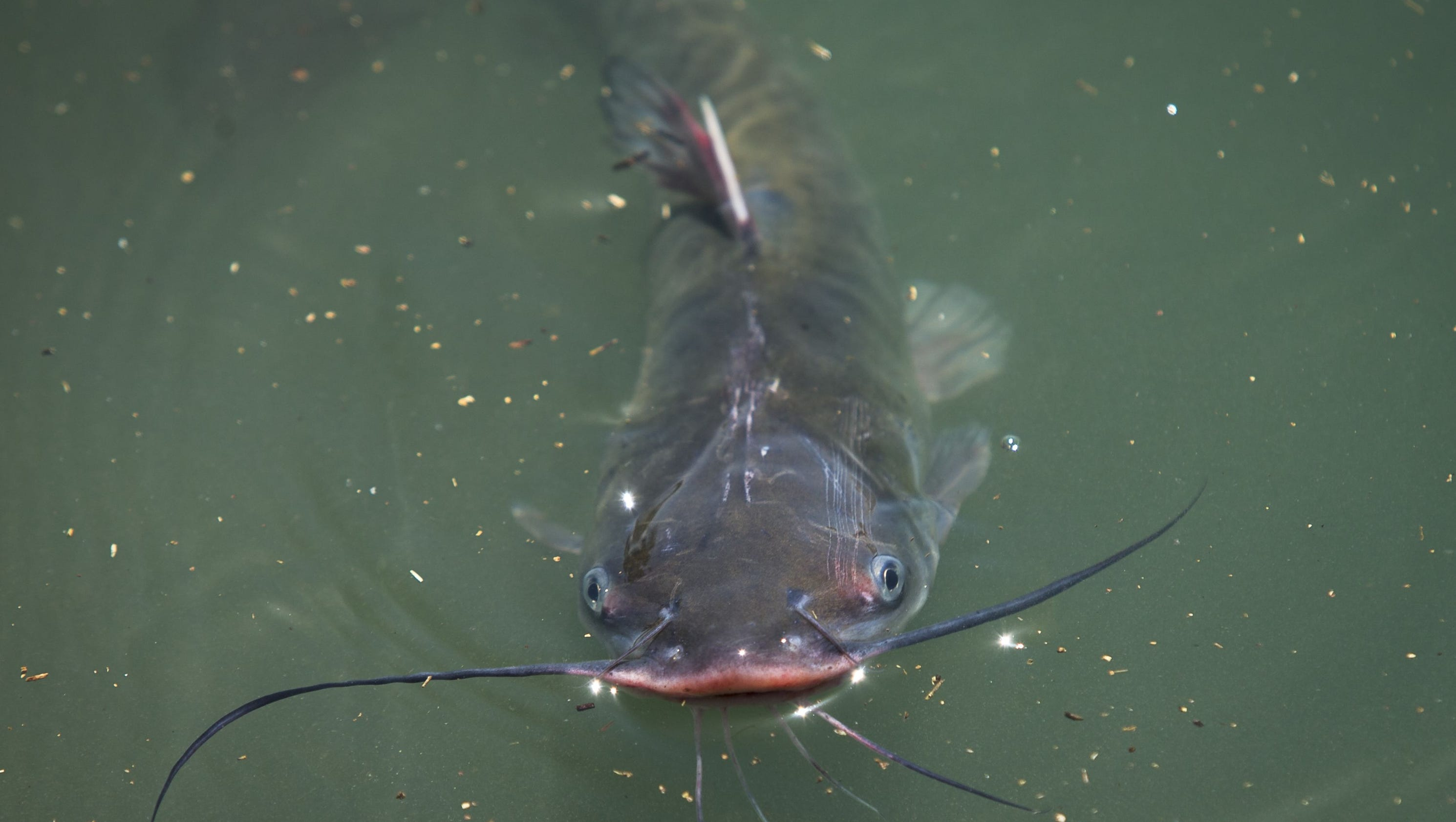 Arizona water stocked with 20 000 trout catfish for Fishing in cincinnati