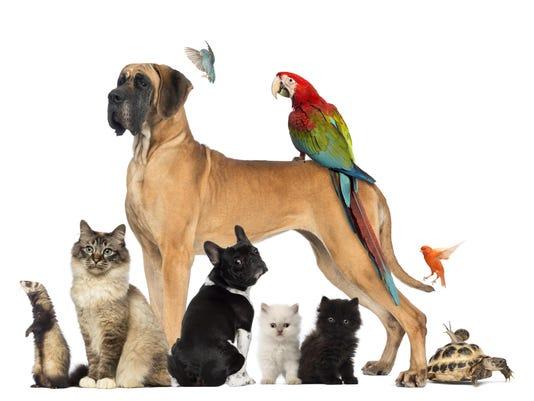 Group of pets - Dog, cat, bird, reptile, rabbit