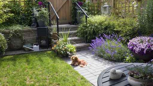 Many plants can be toxic to pets, so keep that in mind when planning gardens where pets will spend time.