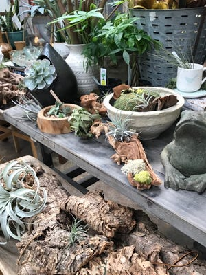 Indoor gardening is an invitation to slow down and enjoy natural beauty while you express your style with the plants and vessels you choose for them.