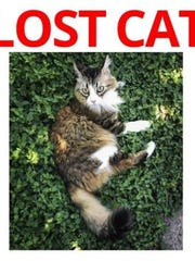 If you've seen Cutty, please call Randall Case at 325-650-5408.
