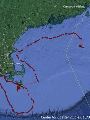 A satellite telemetry buoy attached to the entanglement enables responders to track the whale's 10-day long, 700 mile journey in real time.  The whale is far offshore after first being spotted near Nantucket.