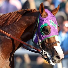 California Chrome.