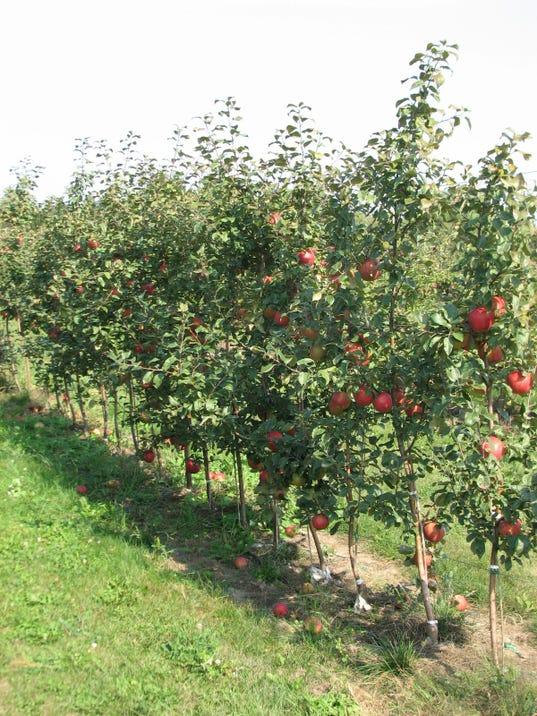 gardening how to choose an apple tree, Beautiful flower