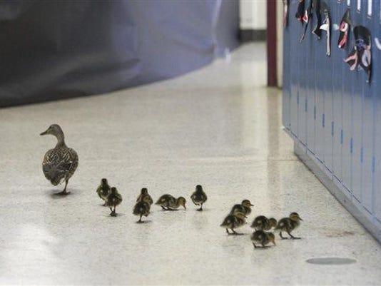 Duck.Walk